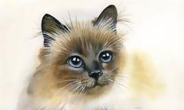 Walercolorinzameling: kat Stock Foto's