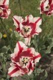 Wales's färger Royaltyfri Fotografi
