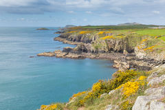 Wales Coast Path towards Caerfai from St Non`s Pembrokeshire UK. Wales Coast Path Pembrokeshire UK near from Caerfai bay to St Non`s bay in the Coast National Royalty Free Stock Image