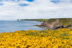 Wales coast scene towards Skomer Island Pembrokeshire Stock Photos