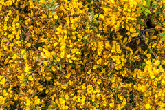 Wales coastal path flora Stock Image