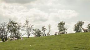 Wales, het UK - weiden en schapen royalty-vrije stock afbeeldingen