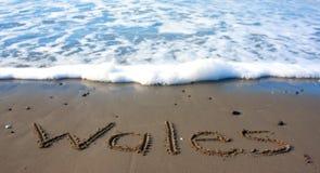 Wales na praia Imagens de Stock Royalty Free