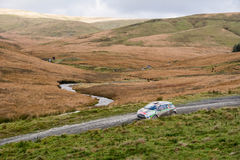 Wales Rally GB 2015 SS Sweet Lamb Royalty Free Stock Images