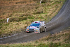 Wales Rally GB 2015 SS Sweet Lamb Royalty Free Stock Photo