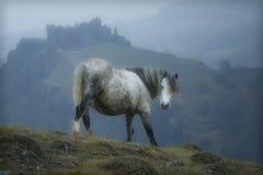 Wales-Schloss-Pferd Lizenzfreie Stockbilder