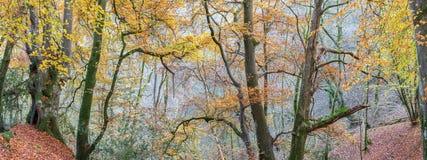 Wales-Waldpanorama stockfoto