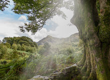 Walesiska berg Royaltyfria Bilder