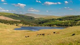 Walesiskt landskap nära Tal-y-bont, UK arkivbild