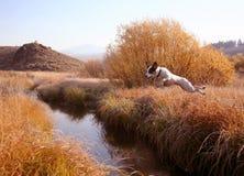 walety jumpin creek Zdjęcia Royalty Free