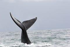 Walgruß Lizenzfreie Stockbilder