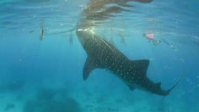 Walhaifilter, der unter Wasser einzieht stock video