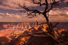 Walhalla Overlook at Sunset. Walhalla Overlook at the North Rim of the Grand Canyon, Arizona stock image