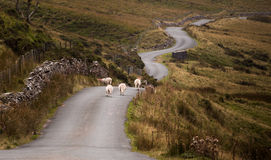 Walijska halna droga Obraz Stock