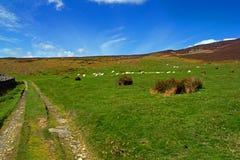 Walijska wieś Obraz Royalty Free