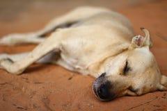 Waliser-Terrier fasten schlafend Lizenzfreies Stockbild