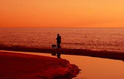 Walk. The dogs along the sea Stock Photos