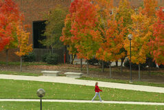 A Walk Across Campus. Female student taking A Walk Across Campus in autumn Stock Photography