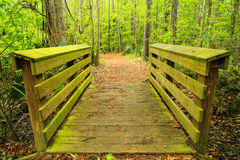 Walk Across. A wooden walkway hidden in a forest in South Carolina Royalty Free Stock Photos