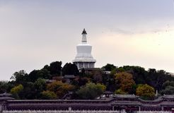 Beihai Park in the late autumn. Walk along the Beihai Lake Park Lake on the island to see a group of white, dove flying Stock Photography
