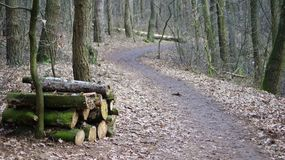 Walk along a forest path. Photo of a road in a dark forest with logs on the left Stock Photography