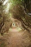 Walk along Mystical Path Royalty Free Stock Photos