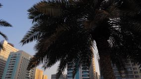 Walk along the palm trees in the park of the big city. Branches and palm leaves move in the foreground. On the. Background are tall skyscrapers of downtown of stock video footage