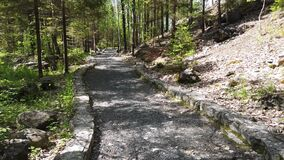Walk along the path in the park. pathway with curbstone. green plants and trees