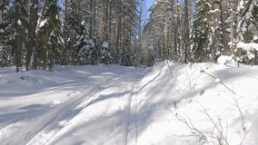 Walk along path in winter snow forest. Video shot of walk along path in winter snow forest on sunny day stock video footage
