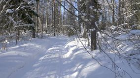 Walk along path in winter snow forest. Video shot of walk along path in winter snow forest on sunny day stock video