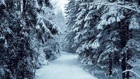 Walk along beautiful winter forest patway in falling snow. Walk along winter forest road in the snow Stock Images