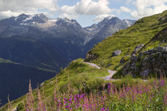 Walk on the alps meadow stock photos