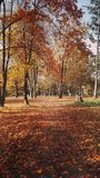 Walk through an automn park. Colors of automn Stock Photo