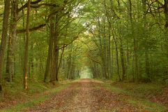 Walk in autumn. Fall colors and promenade along a dirt road in the forest Royalty Free Stock Photos