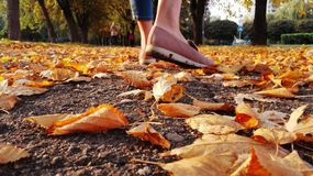 Walk autumn afternoon on a path strewn. With leaves Royalty Free Stock Photography