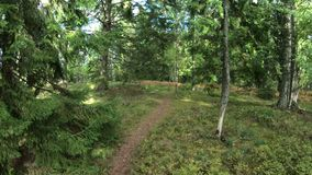 A walk in the autumn a Finnish forest POV stock video footage