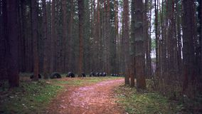 Walk through the autumn forest. Forest path. Winter is coming stock footage