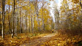 Walk in autumn forest stock video footage