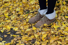 Walk through Autumn Ginkgo leaves Royalty Free Stock Photo