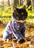 Walk in autumn stock image