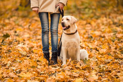 Walk in the autumn park Stock Photography