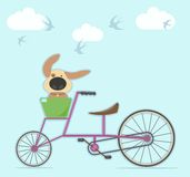 Walk on the bike with the dog. Swallows flying in the clouds Stock Photography