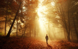 A Walk in breathtaking light in the autumn forest stock photo