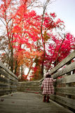 Walk on the bridge. Two year old walking on a bridge with beautiful red and yellow fall scene in the back Stock Photos
