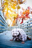 Walk on a bridge2. Two year old walking on a bridge with beautiful fall colors in the background Stock Images