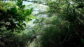 Walk through bushy path, glide shot, exotic plants around. Slow walk through bushy path, glide shot, exotic plants around. First person view, clear ground stock footage