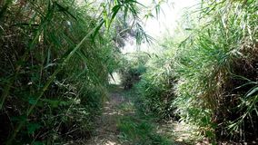 Walk through bushy path, glide shot, exotic plants around. Slow walk through bushy path, glide shot, exotic plants around. First person view, clear ground stock video footage