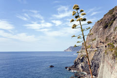 Walk the cinque terre Royalty Free Stock Photography