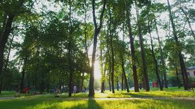 Walk in city park on sunny summer day between green high trees, active leisure. Stock footage stock video