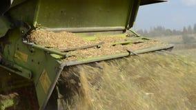 Walk closeup combine harvest wheat agriculture field stock video footage